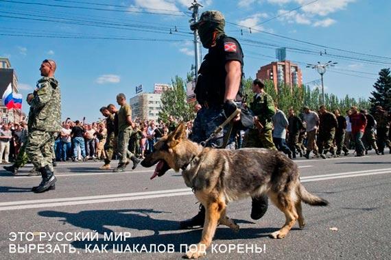 Порошенко распустил Раду и призвал проевропейские силы идти на выборы 26 октября одной командой - Цензор.НЕТ 6227